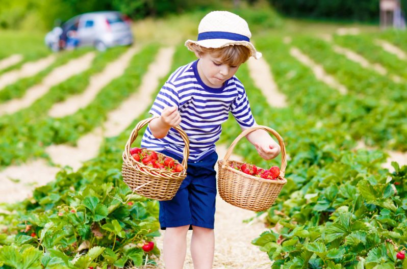 3 Simple Tips for Raspberry and Apple Picking in America